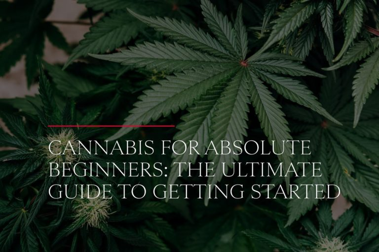 Cannabis for absolute beginners the ultimate guide to getting started