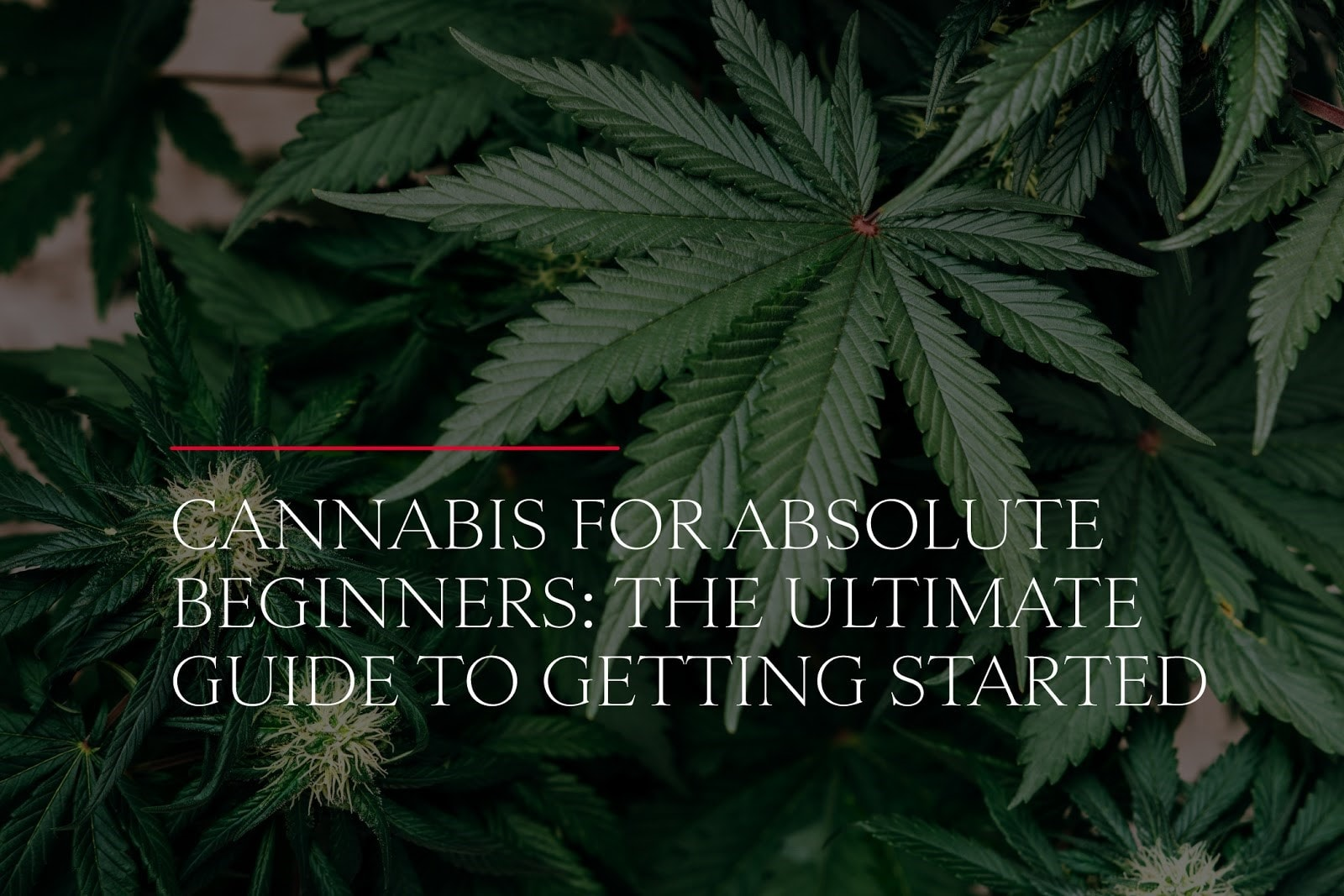 Cannabis for Absolute Beginners: The Ultimate Guide to Getting Started