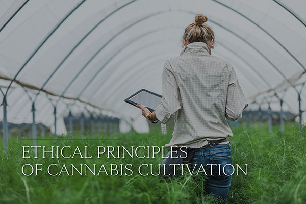 Ethical Principles of Cannabis Cultivation