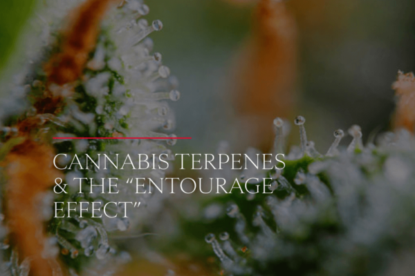 cannabis terpenes and the entourage effect