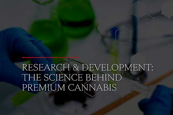 Research and Development: The Science Behind Premium Cannabis