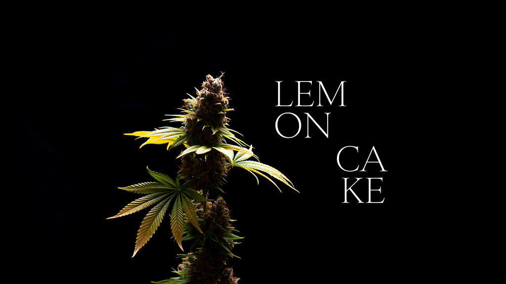 Lemon Cake cannabis flower cultivar