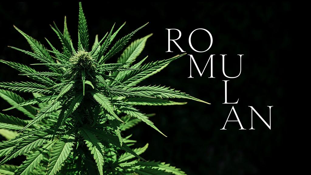 Romulan cannabis flower cultivar