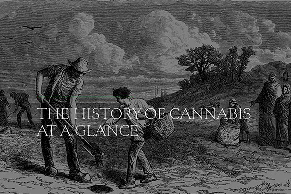 The History of Cannabis at a Glance