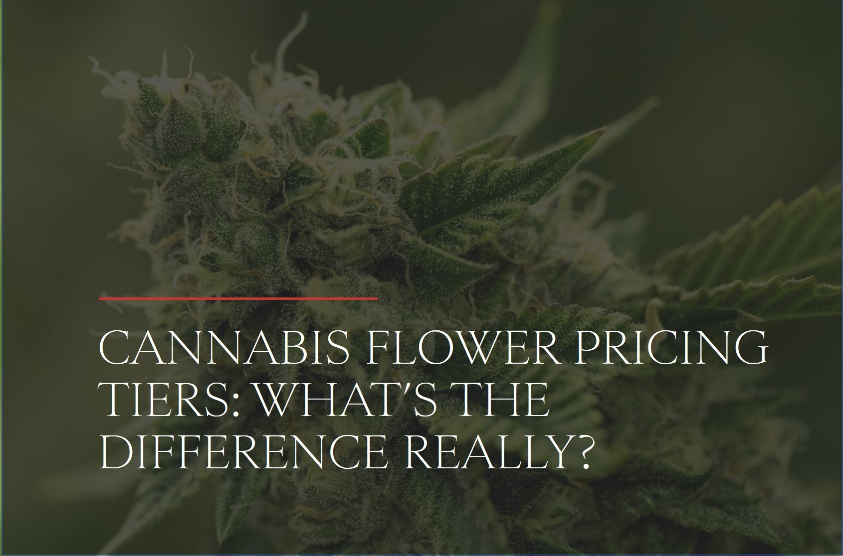 Cannabis Flower Pricing Tiers: What's the Difference Really?